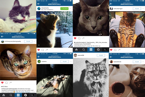 Don't miss your chance to enter our #MeowsicHall Challenge